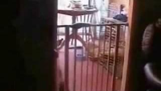 Thumb Parodia de 300 con gatos