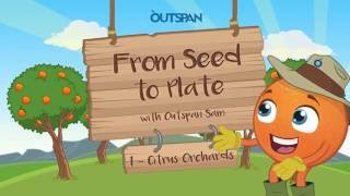 Capespan Animated Explainer - From Seed to Plate 1: Citrus Orchards