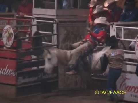 La crudeltà di rodeo