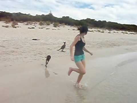 Baby Kangaroo swimming at the Beach Video
