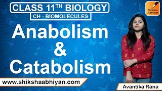 Anabolism and Catabolism - #CBSE Class 11 Biology
