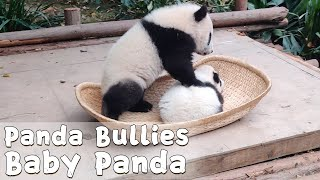 Naughty Panda Spotted Bullying Little Baby Panda | iPanda