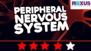 Biology Video: Learn About Peripheral Nervous System