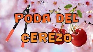 PODA DE FRUTALES: EL CEREZO