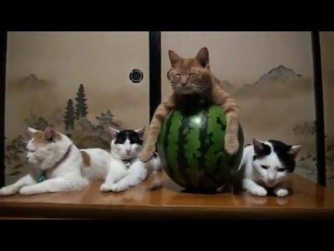 😂😂 ХИТ !!! ОЧЕНЬ КРУТЫЕ КОТЫ 😂😂 ПРИКОЛЫ с КОШКАМИ :)