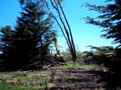 The removal of trees.