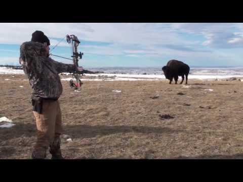 2013 Buffalo Archery Hunt - Montana