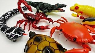 Super Creepy Toys Collection 2 R/C Snake Crab Scorpion Turtle Alligator Frog