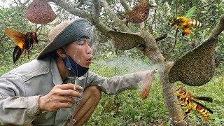 Hành Trình Đi Bắt Ong Rừng Chỉ Với 1 Điếu Thuốc Lào .Kiếm Tiền Triệu Mỗi Ngày. Catch Queen Bee