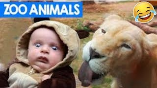 Funniest Pet & Animal Clips, Bloopers & Moments Caught On Tape Weekly😂🙃 of 2019Funny Animal Videos