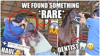RARE FINDING Inside My HORSE'S MOUTH! + Try-On Haul | VLOG