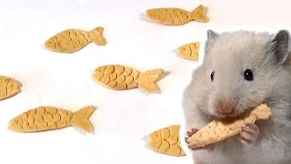 How to Make a Fish-Shaped Snack for a Hamster