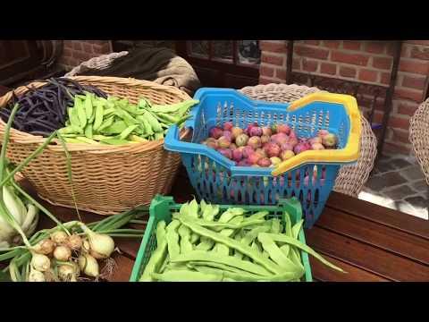 Große Bohnenernte und anderes Gemüse im Juli