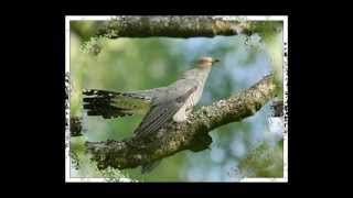 Голоса птиц в природе1-1.утро в лесу ,The song of birds.