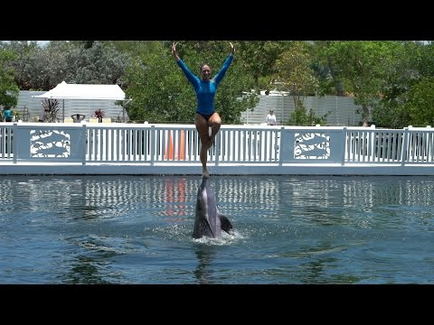Florida Keys Vacation | Day 2 Part 2 | Dolphin Show, Feeding The Tarpon & Brewery Tour