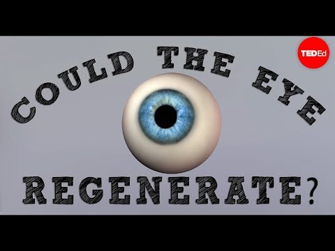 Could a blind eye regenerate? - David Davila