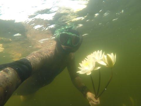 Подводная Охота на Сома в интересных местах.