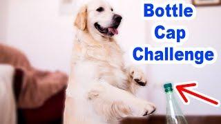 Funny Dog vs Bottle Cap Challenge Compilation