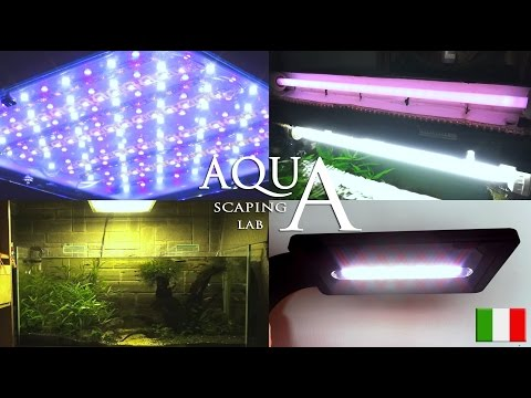 Acquario di casa con acqua dolce how to save money and for Illuminazione acquario dolce