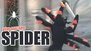 Spider (Rémi Gaillard)
