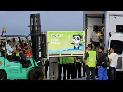 Fu Wa and Feng Yi: Chinese pandas arrive in Malaysia after delay over MH370