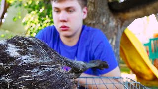 our Emu was too young to die