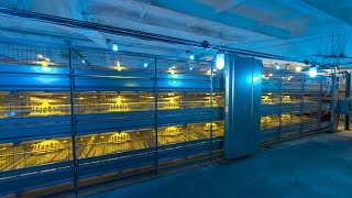 "Broiler Cage ""Robot""; Broiler Cage System; Broiler Colony System; Broiler Poultry equipment"