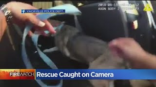 Officer Talks About Rescuing Animals From Vacaville Shelter