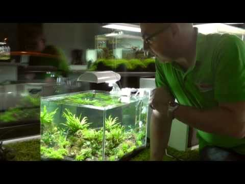 Aquascaping-Aquarium Scapers Tank - YouTube