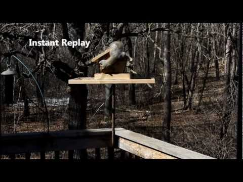 Squirrel Wars Electric Fence Bird Feeder Youtube