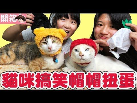 【開箱】貓咪搞笑帽帽扭蛋,雪卷花卷會喜歡嗎?[NyoNyoTV妞妞TV玩具]