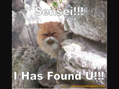 random funny cats 2 the return - YouTube