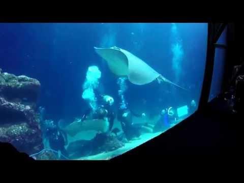 Jack Kittinger, Conservation Int'l Hawai'i, presents from the Maui Ocean Center shark tank!