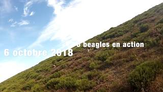 chasse lievres oct 2018