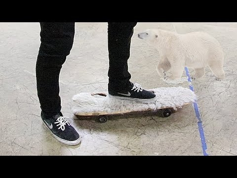 POLAR BEAR GRIP TAPE?!