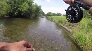 Fly Fishing for Carp in Clear Stream