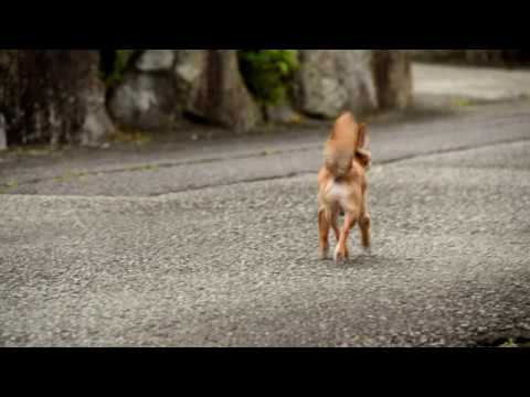 Dog movie walking