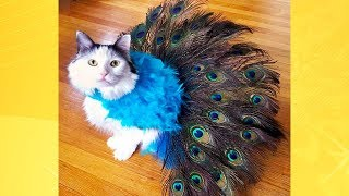 Most Adorable Cats in Costumes   Funny Pets Video Compilation