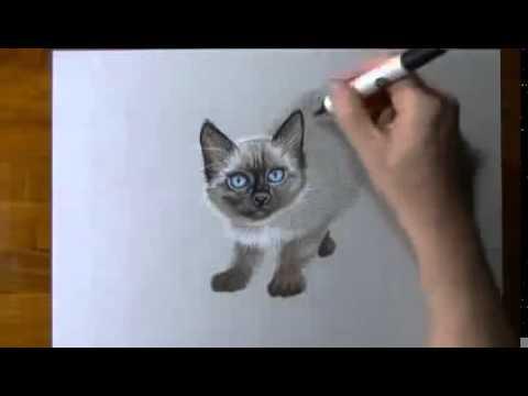 Видео как нарисовать сиамскую кошку