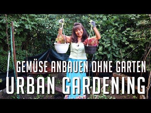 Salat, Gemüse ohne Garten anbauen - Mami zeigt wie | Und so süßes mobiles Gewächshaus