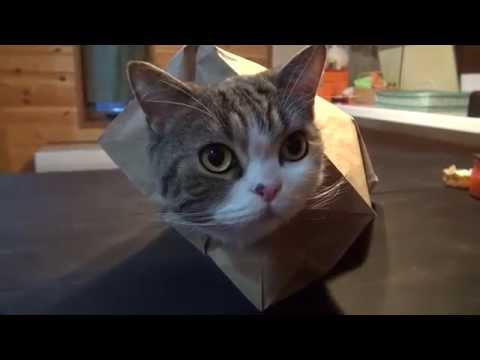 猫のまるちゃんは紙袋も好...