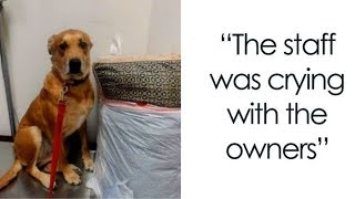 One Family Decides They Can't Take Care Of Their Dog, Drops Him Off At Shelter With Toys And Bed