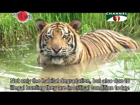 Nature and Life - Episode 196 (Endangered Wildlife of Sundarbans)