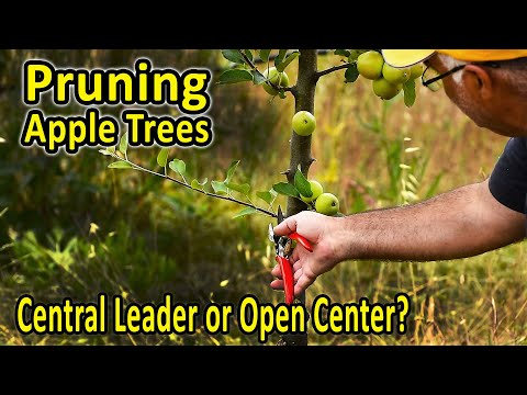 Training and Pruning Apple Trees – Central Leader or Open Center? | Pruning Fruit Trees