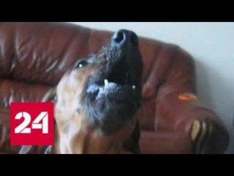 Бесконечный собачий вой довел до суда жителей подмосковного Можайска - Россия 24