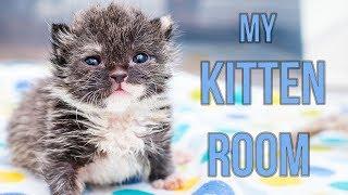 Sneak Peek Inside My Kitten Nursery!