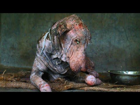 【捨て犬】生きる希望を失い道端で動けない犬を助ける感動的な映像