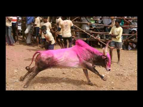 Jallikattu In Palamedu video