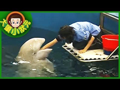 【大頭小狀元】白鯨守護天使  YOYO 第二季 #04