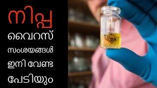 നിപ്പ വൈറസ്  ഇനി വേണ്ട പേടിയും||Health Tips Malayalam
